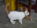 Cats of Houtong, #0310