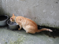 Cats of Houtong, #0312