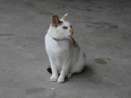 Cats of Houtong, #0315