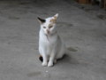 Cats of Houtong, #0316