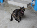 Cats of Houtong, #0317