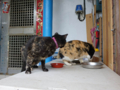 Cats of Houtong, #0318
