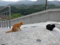 Cats of Houtong, #0320