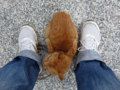 Cats of Houtong, #0323