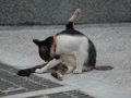 Cats of Houtong, #0325