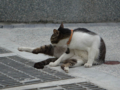 Cats of Houtong, #0326