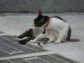 Cats of Houtong, #0327