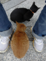 Cats of Houtong, #0328