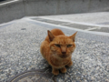 Cats of Houtong, #0329