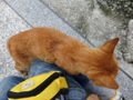 Cats of Houtong, #0330
