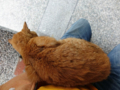 Cats of Houtong, #0332