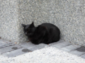 Cats of Houtong, #0334
