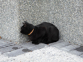 Cats of Houtong, #0335