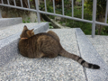 Cats of Houtong, #0337