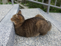 Cats of Houtong, #0338