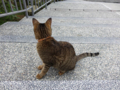 Cats of Houtong, #0339