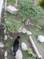 Cats of Houtong, #0340
