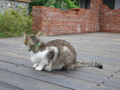 Cats of Houtong, #0341