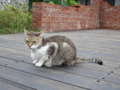 Cats of Houtong, #0342