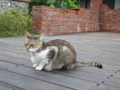 Cats of Houtong, #0343