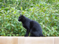 Cats of Houtong, #0345