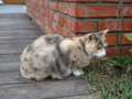 Cats of Houtong, #0346