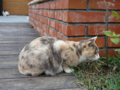 Cats of Houtong, #0347