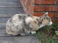 Cats of Houtong, #0348
