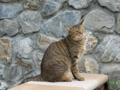 Cats of Houtong, #0349
