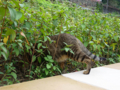Cats of Houtong, #0350
