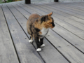 Cats of Houtong, #0351