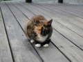 Cats of Houtong, #0352