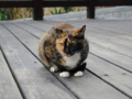 Cats of Houtong, #0353