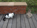 Cats of Houtong, #0355