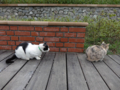 Cats of Houtong, #0356