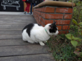 Cats of Houtong, #0358