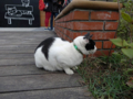 Cats of Houtong, #0359