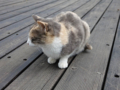Cats of Houtong, #0362