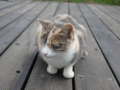 Cats of Houtong, #0363