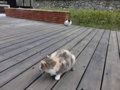 Cats of Houtong, #0365