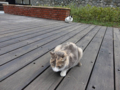 Cats of Houtong, #0366