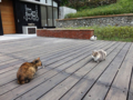 Cats of Houtong. #0367