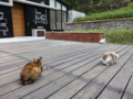Cats of Houtong. #0368