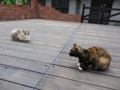 Cats of Houtong. #0369