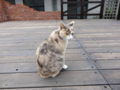 Cats of Houtong. #0372