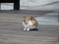 Cats of Houtong, #0373