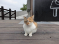 Cats of Houtong, #0376