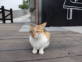 Cats of Houtong, #0377
