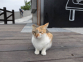 Cats of Houtong, #0378