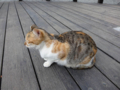 Cats of Houtong, #0381